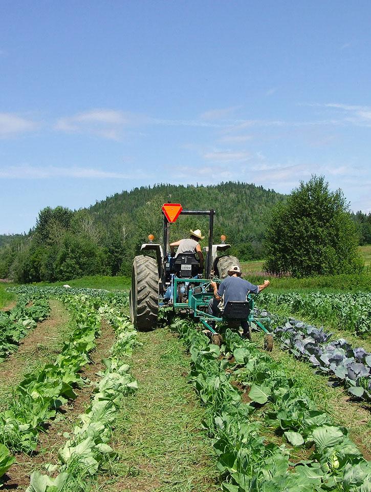 Un tracteur dans un champs de légumes
